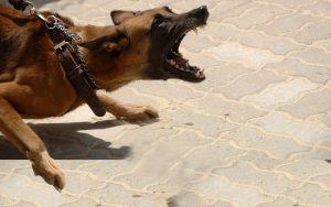 Dog bites lawyer Windsor